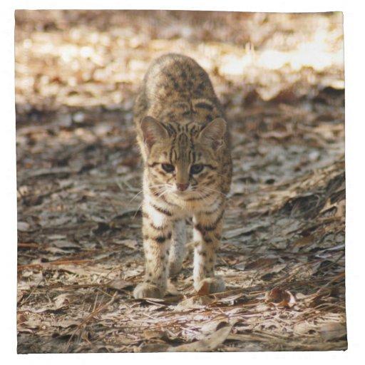 geoffroy-cat-012 guardanapos