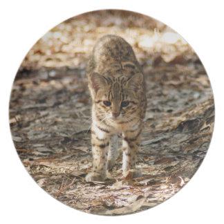 geoffroy-cat-012 pratos