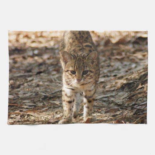 geoffroy-cat-012 pano de prato