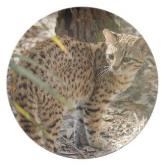 geoffroy-cat-013 pratos