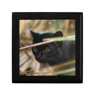 geoffroy-cat-014 porta treco