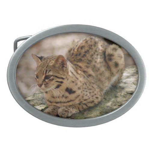 geoffroy-cat-022
