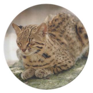 geoffroy-cat-023 prato