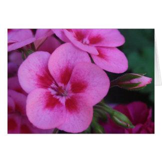 Gerânio cor-de-rosa do Peppermint Cartão Comemorativo