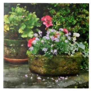 Gerânio e flores da lavanda nas etapas de pedra