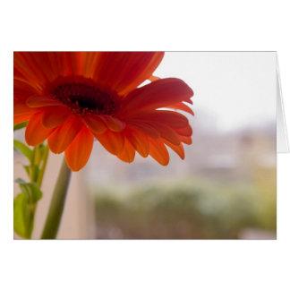 Gerbera #37 - cartão de nota