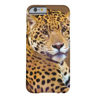 #Gift grande manchado do Gato-amante de Jaguar Capa Barely There Para iPhone 6