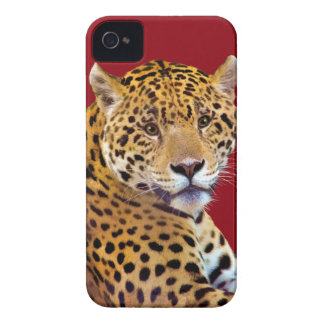 #Gift grande manchado do Gato-amante de Jaguar Capinha iPhone 4