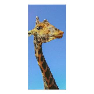 Girafa 10.16 X 22.86cm Panfleto