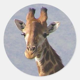 Girafa Adesivo Redondo