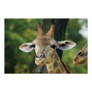Girafa Foto Arte