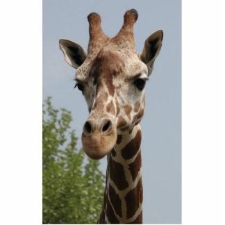 Girafa bonito foto escultura