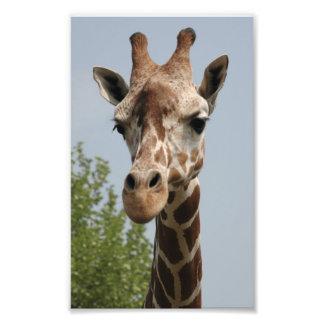 Girafa bonito impressão de foto