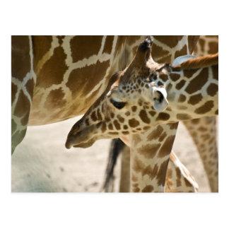 Girafa • Cartão