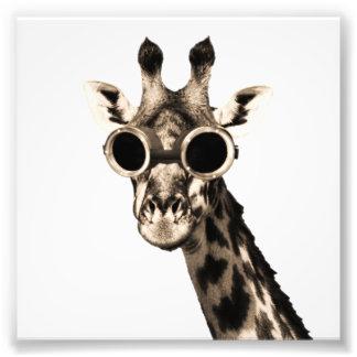 Girafa com os óculos de proteção dos óculos de sol impressão de foto