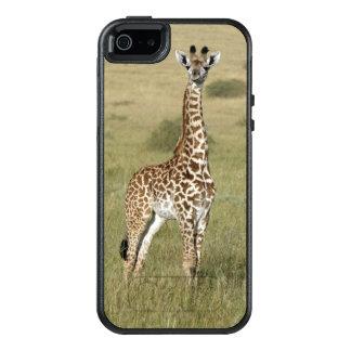 Girafa do bebê em Nairobi