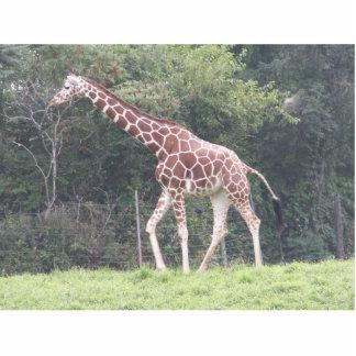 Girafa Escultura De Foto