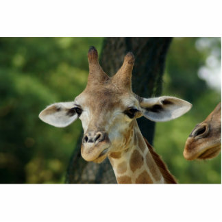 Girafa Fotoescultura