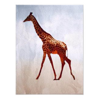 Girafa Impressão De Foto