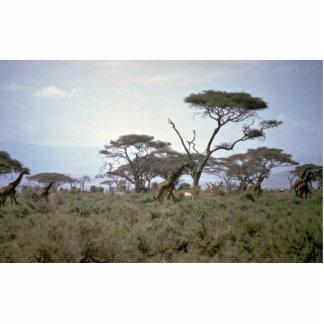 Girafa, Kenya Foto Escultura