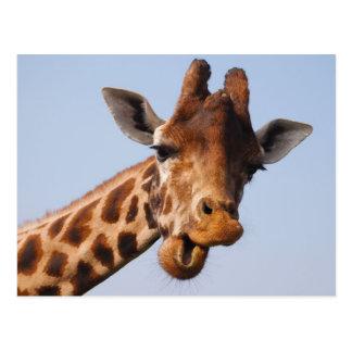 Girafa - o mamífero o mais alto do mundo cartão postal