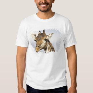 Girafa, parque nacional de Kruger, África do Sul T-shirts