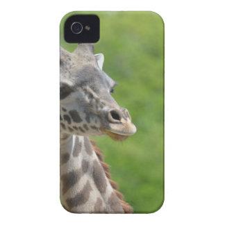 Girafa selvagem capa para iPhone 4 Case-Mate