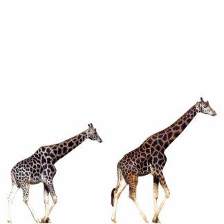 girafas esculturafotos