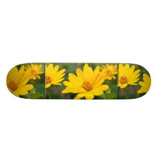 Girassóis falsos de florescência skates