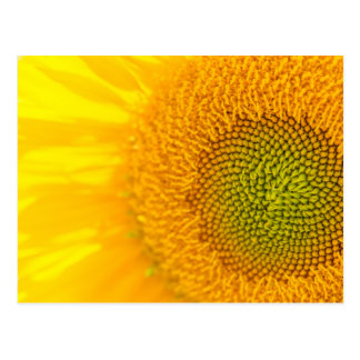 Girassóis florais amarelos cartão postal