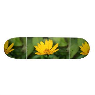 Girassol falso de florescência shape de skate 21,6cm