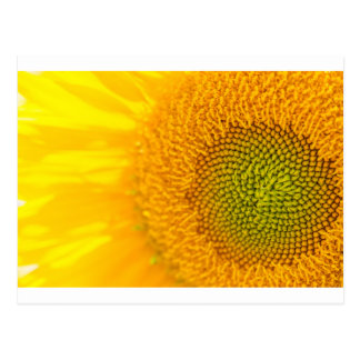 Girassol floral amarelo cartão postal