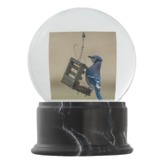 Globo De Neve Jay azul de balanço