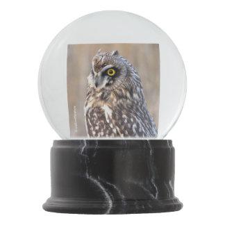 Globo De Neve Retrato de uma coruja Curto-Orelhuda