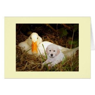 Golden retriever com cartão do pato