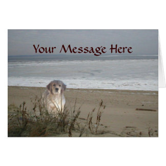Golden retriever no cartão da praia