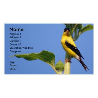 Goldfinch americano cartões de visitas
