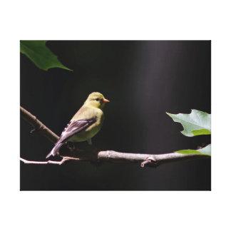 Goldfinch americano, cópia das canvas