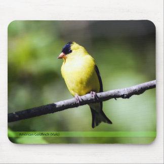 Goldfinch americano Mousepad