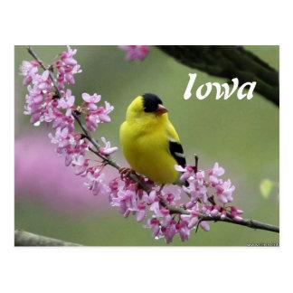 Goldfinch, cartão do pássaro de estado de Iowa
