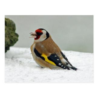 Goldfinch europeu no cartão da neve