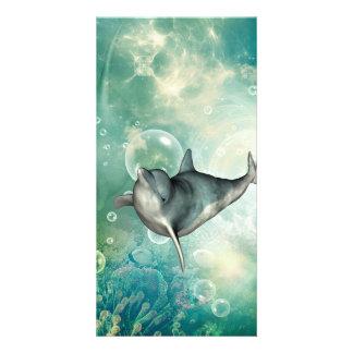 Golfinho engraçado cartão com foto
