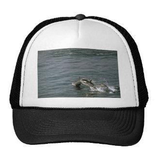 Golfinho listrado bonés