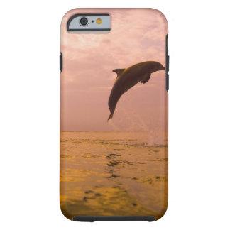 Golfinhos de Bottlenose (truncatus do Tursiops) 2 Capa Tough Para iPhone 6