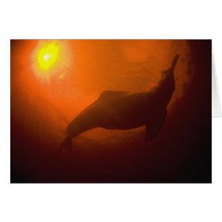 Golfinhos do Rio Amazonas ou Botos (Inia Cartão Comemorativo