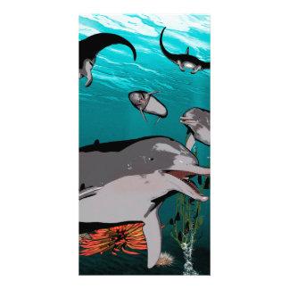 Golfinhos e raios de manta cartão com fotos