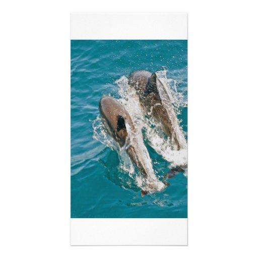 Golfinhos que nadam livre no Oceano Pacífico Cartoes Com Fotos Personalizados