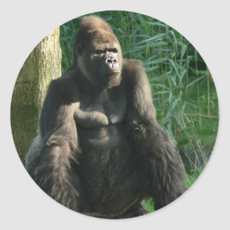 Gorila Adesivo Redondo
