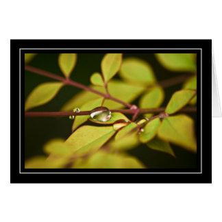 Gotas da chuva no cartão das folhas