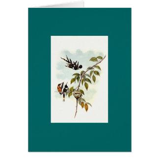 Gould - colibri da Sparkling-Cauda Cartão Comemorativo